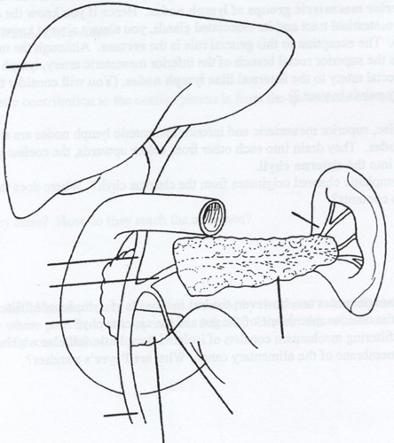 Small Intestine Diagram Unlabeled Trusted Wiring Diagram